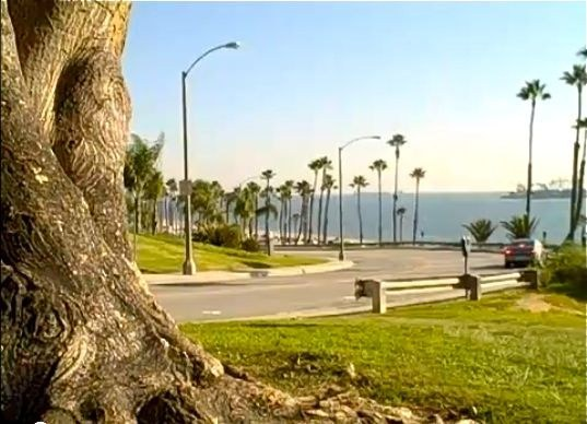 Cherry Avenue Long Beach Ca